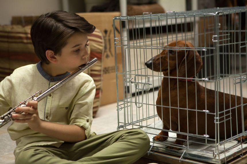 Richard-ToddSolondzsExquisiteImperfectWeiner-Dog-1200